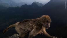© Riccardo Marchegiani - Wildlife Photographer of the Year