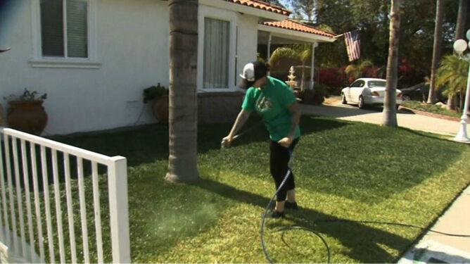 Amerykanie walczą z suszą. Trawniki malują na zielono